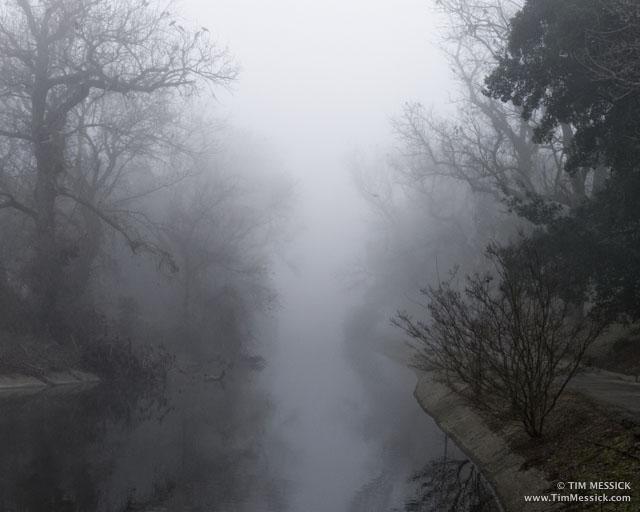Foggy morning, UC Davis Arboretum