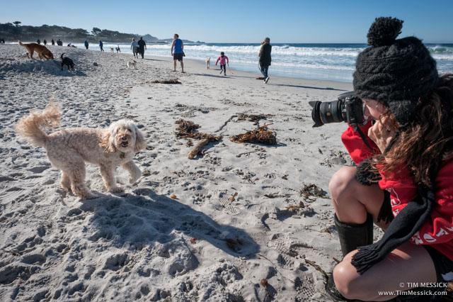 Rosie on Carmel Beach