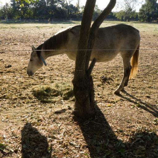 P1020404-horse