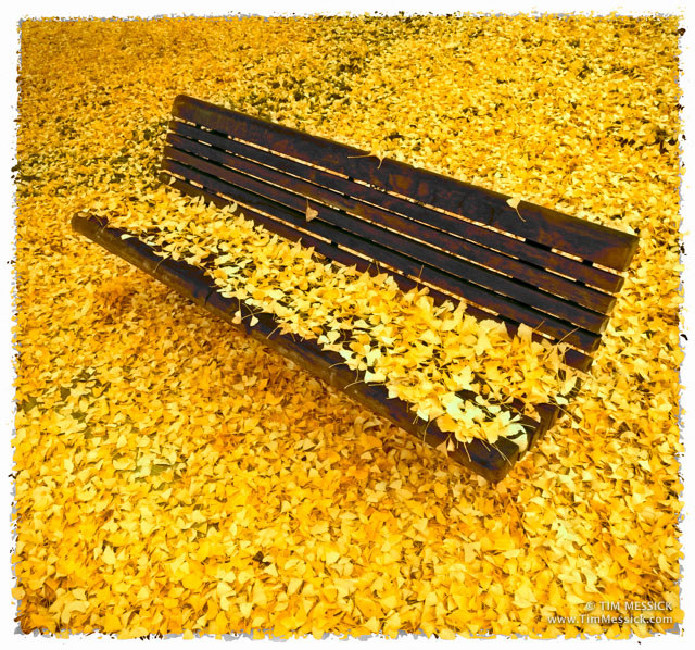 Bench with Ginkgo leaves