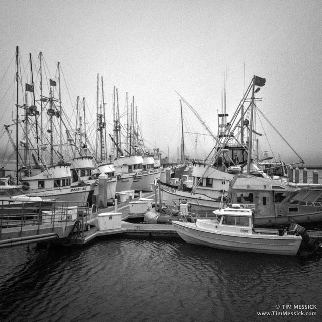 Bodega_Bay-3