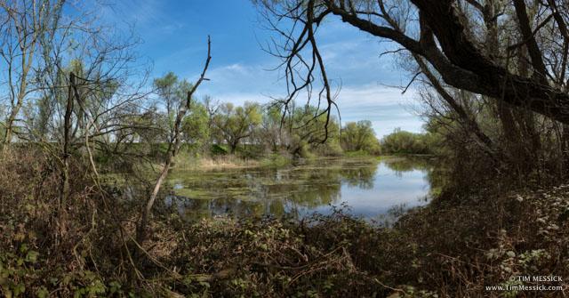 Putah Creek