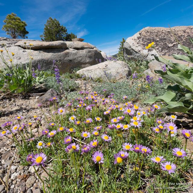Ridge-top garden