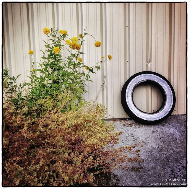 IMG_2503-tire