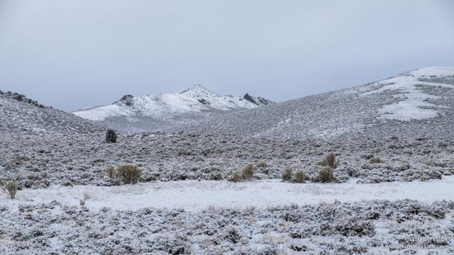 Snow on Mt. Biedeman