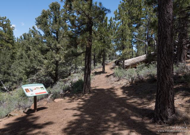 Curtz Lake trail